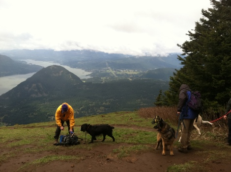 Matt Werbach Dog Mountain with Dogs